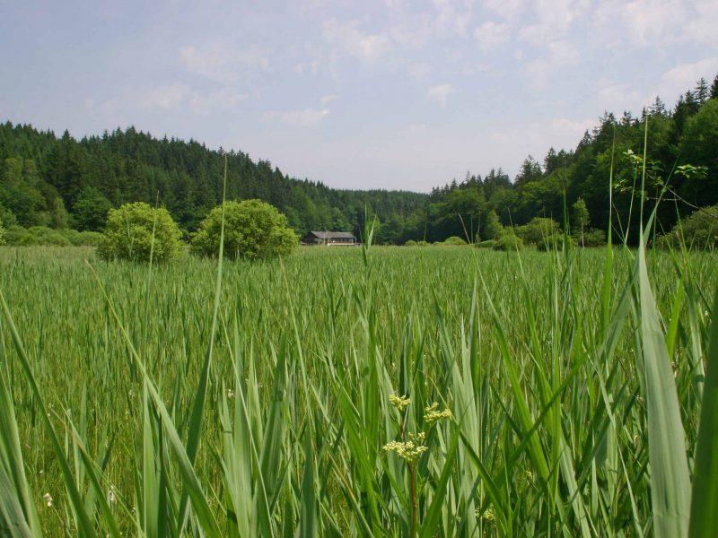 zum_dammerbauer_landschaft-umgebung26